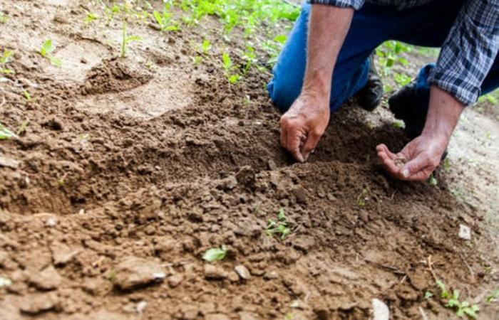 curso de jardinero